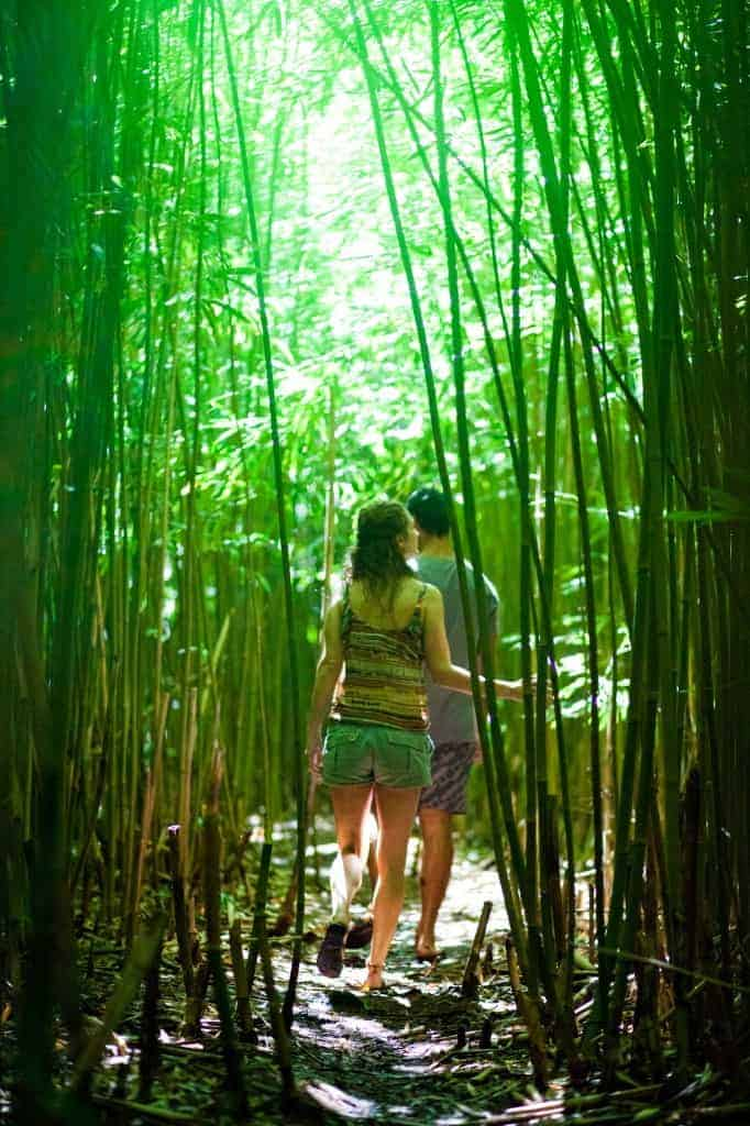 Couple exploring bamboo forest, Hawai