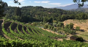 Benziger Family Winery, Sonoma Valley, California