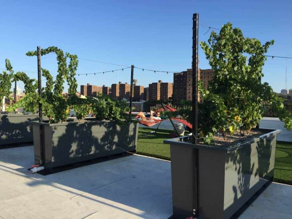 Rooftop Reds, Brooklyn Navy Yard