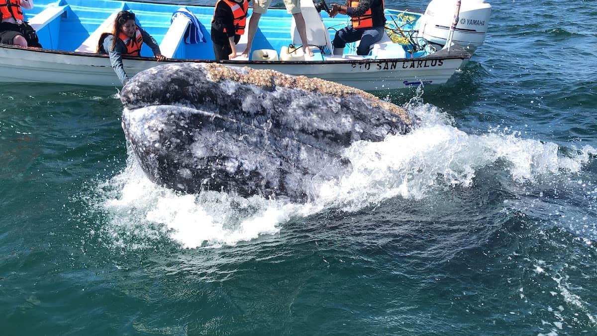 Ballenas mejores lugares para verlas en bcs