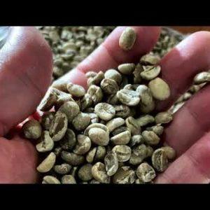 Café 100% orgánico de altura Finca Argovia